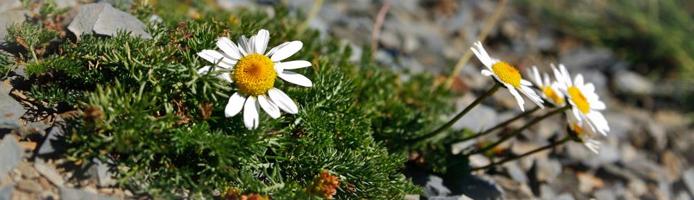 Reisepixel - Flora